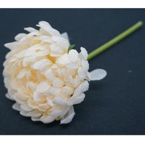FLOWER キク/ホワイト shopv