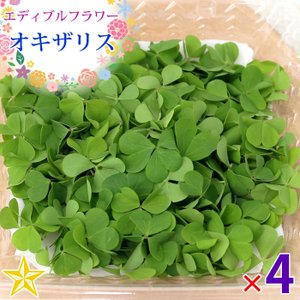食用の葉 オキザリス クローバー型 山梨県 富士吉田産 約10g×4パック|shopvision