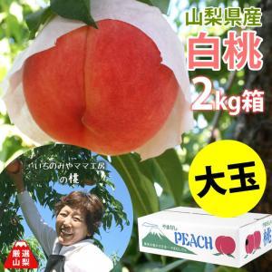 もも 白桃 白鳳 山梨県産 送料無料 朝取 新鮮 農家直送 いちのみやママ工房の桃 大玉 2kg箱 (5〜6玉)|shopvision