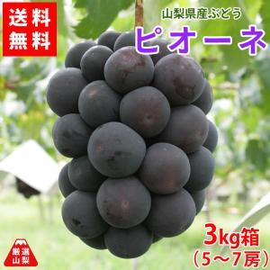 ぶどう ピオーネ 山梨県産 送料無料 農家直送 種なしブドウ 高級品種 ピオーネ3kg箱 (5〜7房)|shopvision