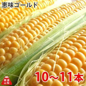 とうもろこし 恵味ゴールド (めぐみゴールド) 山梨県 農家直送 10〜11本|shopvision