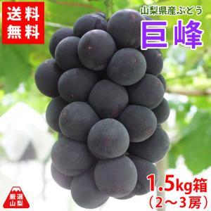ぶどう 巨峰 山梨県産 送料無料 農家直送 種なしブドウ 巨峰 1.5kg箱 (2〜3房)|shopvision