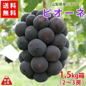 ぶどう ピオーネ 山梨県産 送料無料 農家直送 種なしブドウ 高級品種 ピオーネ1.5kg箱 (2〜3房)|shopvision