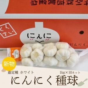 にんにく 1kg×10ネット 食用におすすめ 中国産 特栽 上海嘉定種(ホワイト)|shougakoubou