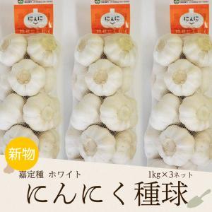 にんにく 1kg×3ネット 食用におすすめ 中国産 上海嘉定種(ホワイト)|shougakoubou