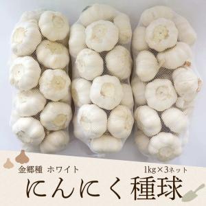 にんにく種球 1kg×3ネット 中国産 上海嘉定種(ホワイト)|shougakoubou