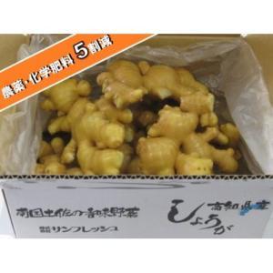 【食用】高知県産 特別栽培 近江生姜(白)3kg 【富里出荷】|shougakoubou