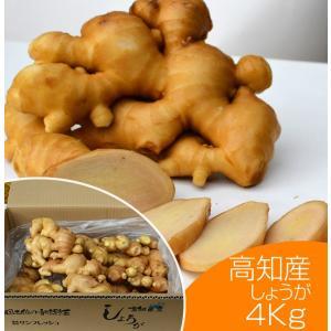 【青果】食用 高知県産 近江生姜 白 4kg