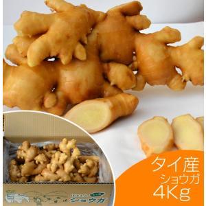 生鮮生姜 タイ産ほほえみショウガ 4kg(近江生姜 白) /野菜 いかなごのくぎ煮 はつがつお