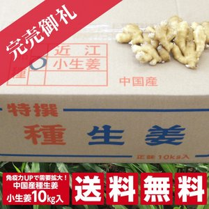 【種生姜】中国産 小生姜 10kg[生姜種 たね生姜 生姜の種 生姜栽培 ショウガ しょうが 栽培]