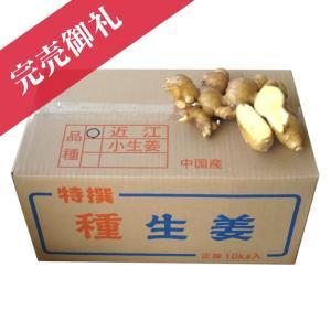 種生姜 中国産 近江生姜(黄)10kg 生姜種 生姜栽培