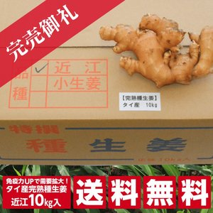 【種生姜】タイ産 完熟種生姜(近江生姜 白)10kg[生姜種 たね生姜 生姜の種 生姜栽培 ショウガ しょうが 栽培] shougakoubou