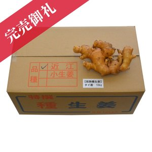種生姜 タイ産完熟種生姜 近江生姜(白)10kg 生姜種 生姜栽培 種ショウガ