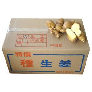 【種生姜】中国産 近江生姜(黄)10kg [生姜種 たね生姜 生姜の種 生姜栽培 ショウガ しょうが 栽培] shougakoubou
