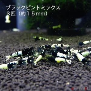 ブラックピントミックス 若親個体 3匹 (約15mm) shrimpariel