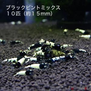 ブラックピントミックス 若親個体 10匹 (約15mm) shrimpariel