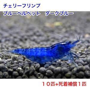 【今週のおすすめ】チェリーシュリンプ ダークブルー 10匹 死着補償サービス+1匹 shrimpariel