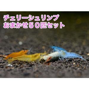 チェリーシュリンプ おまかせ50匹セット 死着補償サービス+5匹|shrimpariel