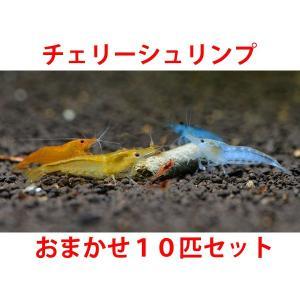 チェリーシュリンプ おまかせ10匹セット 死着補償サービス+2匹|shrimpariel
