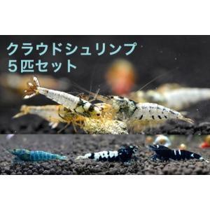 【お買い得!】クラウドシュリンプ 初心者向け5匹セット shrimpariel
