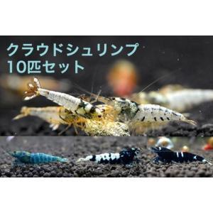 【お買い得!】クラウドシュリンプ 初心者向け10匹セット shrimpariel