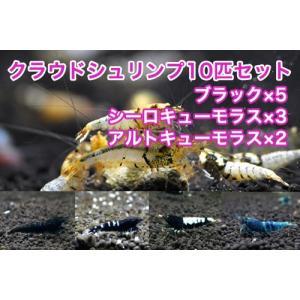 【クラウド10匹セット】クラウドブラック5匹+シーロキューモラス3匹+アルトキューモラス2匹 shrimpariel