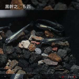 黒幹之 5匹|shrimpariel