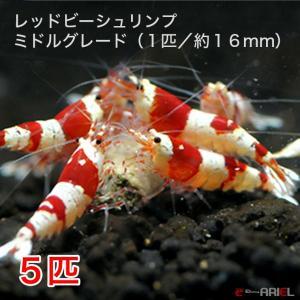 レッドビーシュリンプ ミドルグレード(5匹/16mm前後)死着補償サービス+1匹|shrimpariel