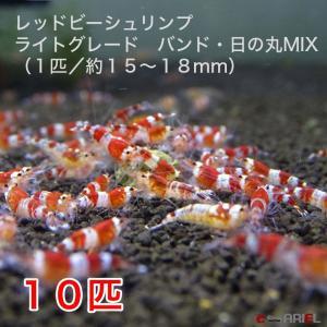レッドビーシュリンプ ライトグレード バンド・日の丸MIX (10匹/15〜18mm前後)死着補償サービス+2匹|shrimpariel