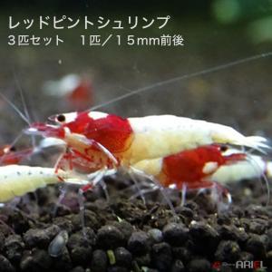 レッドピントシュリンプ 3匹(1匹/約1.5cm) shrimpariel