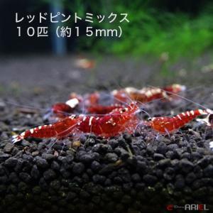 レッドピントミックス 若親個体 10匹 (約15mm) shrimpariel