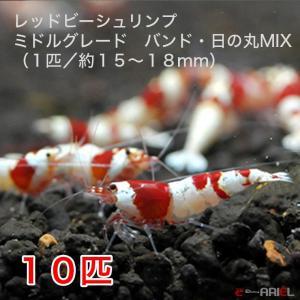 【今週のおすすめ】レッドビーシュリンプ ミドルグレード バンド・日の丸MIX(10匹/15〜18mm前後)死着補償サービス+2匹 shrimpariel