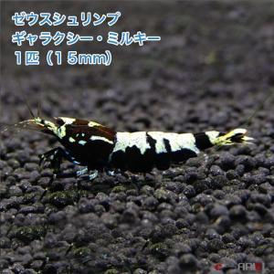 ゼウスシュリンプ  ギャラクシー・ミルキー  1匹(1匹/約1.5cm)|shrimpariel