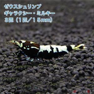 ゼウスシュリンプ  ギャラクシー・ミルキー  3匹(1匹/約1.5cm)|shrimpariel
