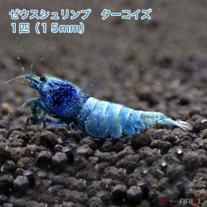 ゼウスシュリンプ ターコイズ  1匹(1匹/約1.5cm)|shrimpariel