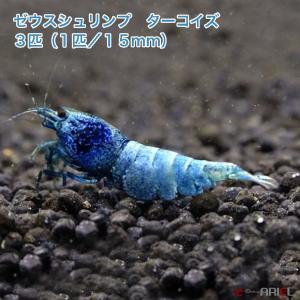 ゼウスシュリンプ ターコイズ  3匹(1匹/約1.5cm)|shrimpariel