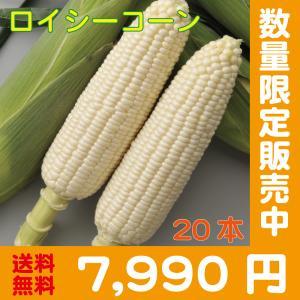 【予約中】しろいあま〜い450gの特大とうもろこしロイシーコーン2L 20本【送料無料】北海道産朝収穫即日発送 shun-choku