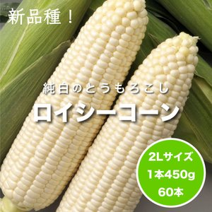 【予約中】しろいあま〜い450gの特大とうもろこしロイシーコーン2L 60本【送料無料】北海道産朝収穫即日発送 shun-choku