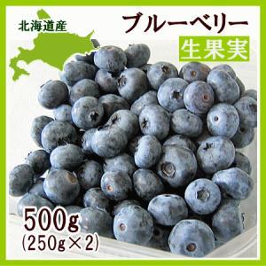 ブルーベリー (生果実) 500g(250g×2) /北海道産 出荷時期:8月