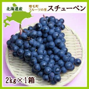 スチューベン(黒ぶどう )2Kg(4〜5房)北海道産 出荷時...