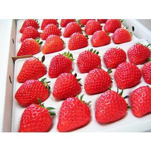 夏いちご 2L-L(300g・15〜24粒)×2トレー(計600g)北海道産 夏イチゴ 出荷期間:6...