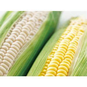 白と黄色のとうもろこしセット(各5本 計10本)北海道産 出...