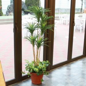 造花 観葉植物 大型 ユッカプラント 140 TKD snb CT触媒 silkflower