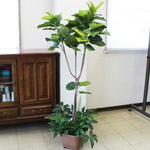 造花 観葉植物 大型 ウンベラータ 150 snb CT触媒 silkflower