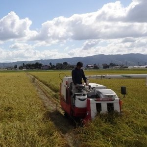 お米 玄米 やわらか玄米 玄米食 有機質肥料で育だてたお米 栽培期間中農薬不使用 コシヒカリ お試し(900g)|simizunouen|04