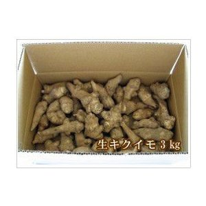 4月中旬春収穫 生菊芋(キクイモ)3kg クール便送料込み|sirakabanouen