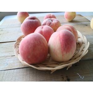 ふくしまのもも 桃 3.0キロ箱  産地直送 関東東北は送料無料 11〜12玉 3000円|sisidoringoen