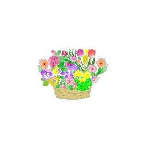 花の種(たね)伝統品種 sizen