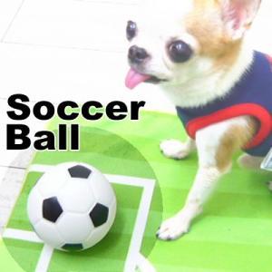 PVC サッカーボールトイ (チワワ 小型犬 おもちゃ ボール) skipdog010420