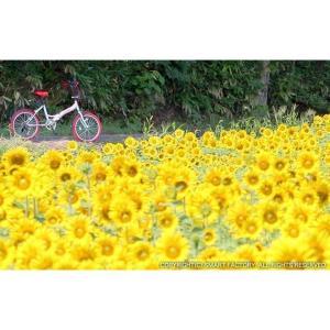 送料無料 折りたたみ自転車 20インチ 6段変速 サムシフト 折畳み自転車 折畳自転車 自転車 鍵 ライト 折りたたみカゴ付き 小径車 ミニベロ 自転車の売れ筋通販|smart-factory|16